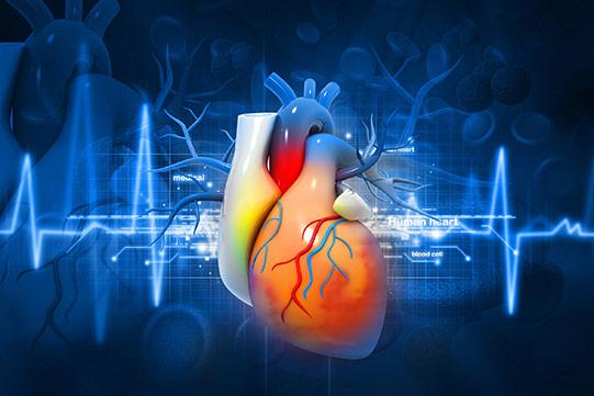 Przychodnia Kardiologiczna KARDIOmed - usługi kardiologiczne