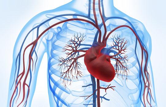 Stenoza aortalna - Przychodnia Kardiologiczna KARDIOmed